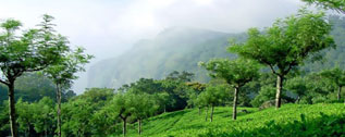 Himachal-tour-packages-2015
