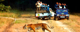 sightseeing-at-jim-corbett-national-park-and-sattal